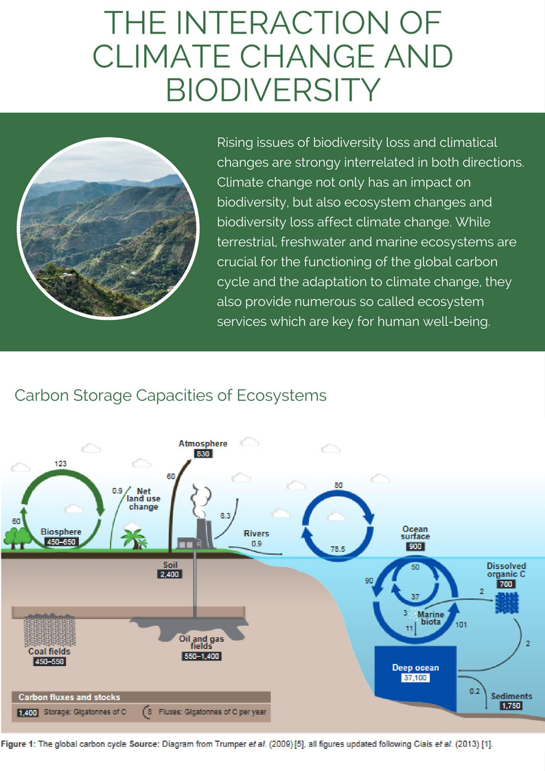 Biodiversity and Carbon Storage Capacities of Ecosystems